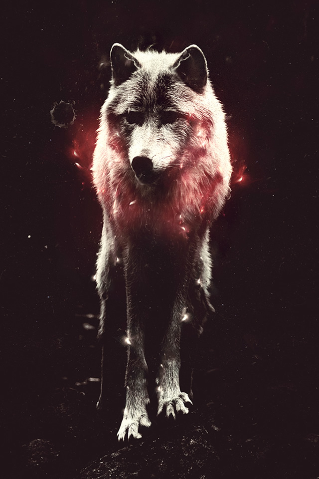 wolf iphone wallpaper wallpaper of the week 188 by sebastian andaur 8538